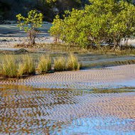 Grasses and mangroves in the tidal flats.
