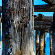 Weathered piles of McKenzie's jetty.