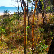 Trees painted with aboriginal motifs adjacent to McKenzie's jetty.
