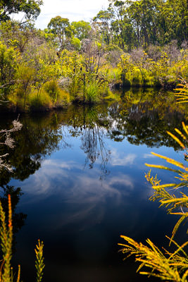 Thumbnail image ofTrees, grasses and clouds reflected in a lagoon.