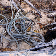 Abandoned rope on the beach.