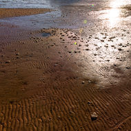 Morning sun floods across the ripples in the sand at low tide.