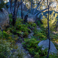 The Sphinx and Turtle Rock walking trail through the granites of Girraween.