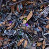 Tiny wild flower emerges from the forest floor.