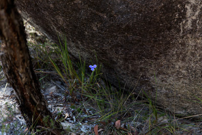 Thumbnail image ofIf that boulder rolls just a little bit further...