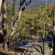 Having gained some distance and elevation from the valley floor Sphinx and Turtle Rock walking trail looks out over the granites and eucalypts.