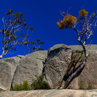 Trees growing, somehow, on top of Turtle Rock.