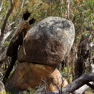 Weathered granite boulder, the resting place for a burnt tree trunk.