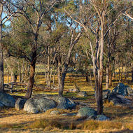 Cattle grazing country, difficult to plough for crops with those granite boulders.