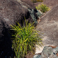 Grasses on granite.