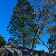 Trees, rocks and blue sky.