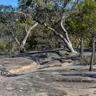 A few big old eucalypts clinging on to the granite.