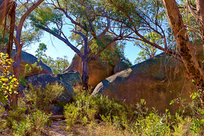 Thumbnail image of The play of sun light on the trees and boulders.
