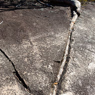 Tree root follows down a crack in the granite.