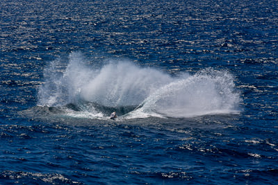Thumbnail image ofSeveral tonnes of breaching humpback whale leaves...
