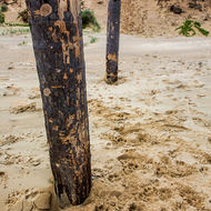 Posts driven into the sand of the beach.