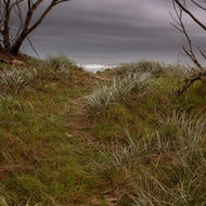 Walking trail to the beach as a storm approaches.