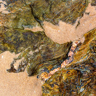 Deformed and twisted sedimentary rock with a quartz stringer on Nambucca beach.