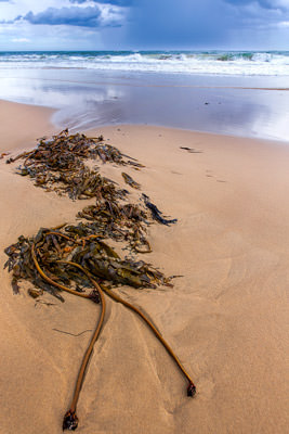 Thumbnail image ofLead in lines: beached kelp points to offshore...