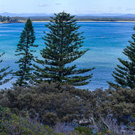 Stunning view across Trial Bay to South West Rocks, from the jail turret; not for prisoners.