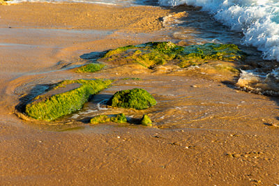 Thumbnail image of Algal covered rocks at low tide.