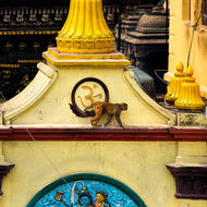 A monkey traverses the façade of a building at the Pashupati temple.