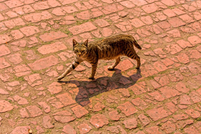 Thumbnail image ofAlert but lean moggie at an old peoples' home...