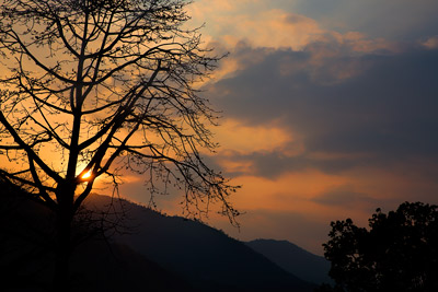Thumbnail image of Sunset behind the mountains silhouettes a tree.