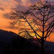 Setting sun lights up the sky over the mountains and silhouettes a tree.
