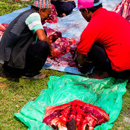 Head to tail utilization of slaughtered cattle.