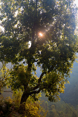 Thumbnail image ofMorning sun, barely above the mountain top, shines...