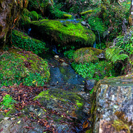 Moss covered rocks in a mountain stream.