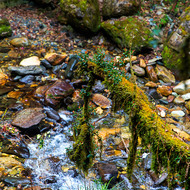 Looking down to a mossy mountain stream.