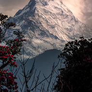 Annapurna South at sunrise.