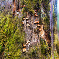 Ledge fungus and moss on a tree.