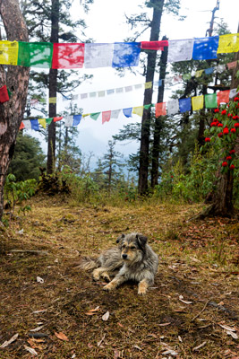 Thumbnail image of Trail dog and prayer flags.