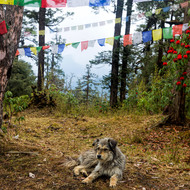 Trail dog and prayer flags.