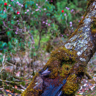 Moss covered tree angles across.