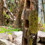 Well-worn mossy gate post.