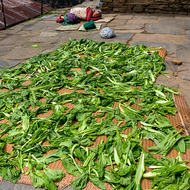 Sleeping while the vegetables sun dry.