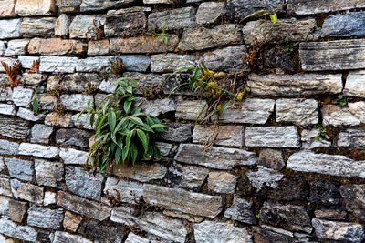 Thumbnail image ofStone wall with self-sown garden.