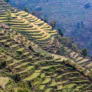 Farm terraces with cattle grazing under the watchful eye of a herder.