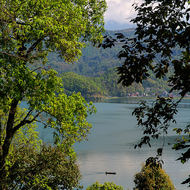 Lake Phewa between the trees.