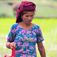 Woman watching her step carefully as she walks between the flooded paddy fields.