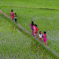Children running on a small path between the rice fields.