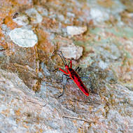 Red bug on a tree.