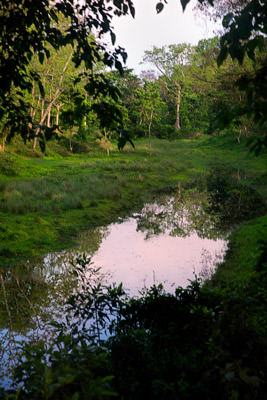 Thumbnail image ofForest swamp.
