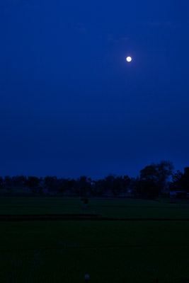 Thumbnail image of Moon rising over the rice paddy fields.