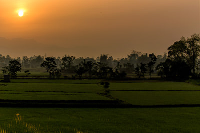 Thumbnail image of Sunrise through mist over the rice paddy fields.