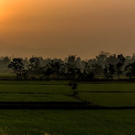 Sunrise through mist over the rice paddy fields.